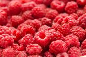 Fresh And Sweet Red Raspberries Texture Background. Raspberry Fruit Pile Background. Selection Of Fr poster