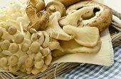 fresh exotic mushrooms