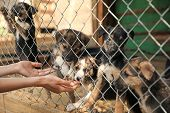 Woman Near Cage With Homeless Dogs In Animal Shelter, Closeup. Concept Of Volunteering poster