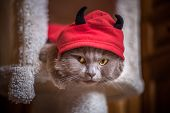 Cat In A Devil Costume, Red Hoods, Black Horns, Dissatisfied Gaze Of Yellow Eyes, Halloween poster