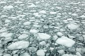 Ice Cakes In Antarctic Water
