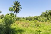Vanilla Plantation On The Bright Sunny Day On Seychelles Island, La Digue