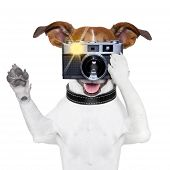 Foto de cão