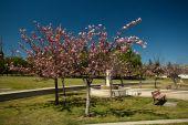 Cupertino Memorial Park