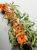 picture of sea-buckthorn  - A branch of sea  - JPG