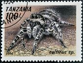 A stamp printed in Tanzania shows image of a salticus sp.