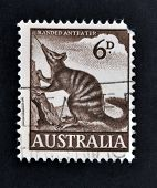 A stamp printed in Australia shows numbat Banded Anteater