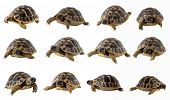 stock photo of carapace  - turtle close up isolated on white background - JPG