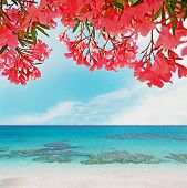stock photo of oleander  - some pink oleanders by the turquoise shore - JPG
