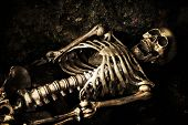 Skeleton lying in shallow grave at Halloween