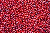Lingonberry Texture