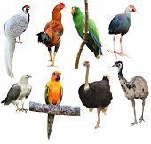 Collection Of Bird Isolated