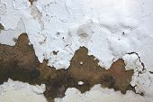image of fungus  - rising damp and peeling paint on exterior wall