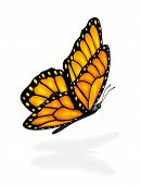 image of monarch  - Flying orange butterfly and shadow isolated on a white background - JPG