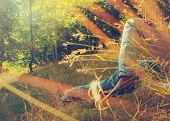 foto of tall grass  - Retro Vintage FIltered Photo Of Man Sleeping In Meadow Grass - JPG