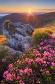 Fabulous sunrise in the mountains. Beautiful summer landscape with flowers of rhododendron. Meadow with red flowers. Carpathian mountains, Ukraine, Europe