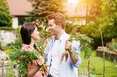 Gardening in summer - happy couple in vegetable garden harvesting carrots and having lots of fun