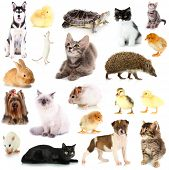 Collage of different pets isolated on white