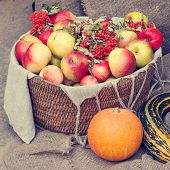 image of marrow  - Apples in wicker basket pumpkin marrow and rowan berry - JPG