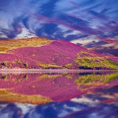 Colorful Landscape Scenery Of Pentland Hills Slope Covered By Purple Heather Flowers Reflected In Th