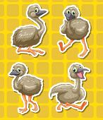 Illustration of baby ostriches set