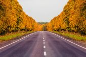 Road At Autumn With Alley Of Trees