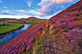image of violets  - Vivid colorful landscape scenery with a footpath through the hill covered by violet heather flowers and green valley river mountains Pentland hills near Edinburgh Scotland - JPG