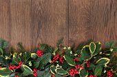 Christmas and winter background border with holly, mistletoe, ivy, fir and cedar cypress over old oa