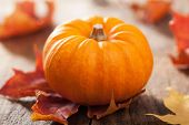 picture of gourds  - decorative pumpkins and autumn leaves for halloween  - JPG