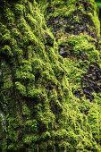 Moss Overgrown Tree