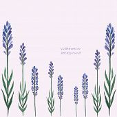 Lavender Watercolor.