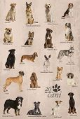 Dog breeds poster in Italian