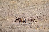 Slim Horses