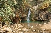 foto of masada  - creek with mineral water, Ein Gedi Nature Reserve, near Dead Sea, Israel