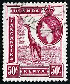 Postage Stamp K., U. And T. 1954 Giraffe, Giraffa Camelopardalis
