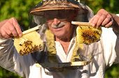 Experienced senior beekeeper holding honeycombs from small wedding beehive in apiary