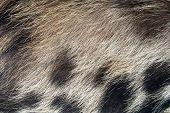 Pig Skin Hair Texture