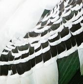 Painted Stork Feathers