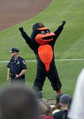 The Orioles Bird