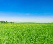 Sunny Summertime Green Plain