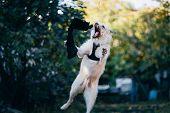 Fun White Irish Wolfhound Jump In Nature.