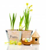 Easter Eggs With Birdhouse And Narcissus Flowers, Isolated On White Background