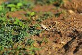 stock photo of chameleon  - Chameleon in the wild on the island of Sri Lanka - JPG