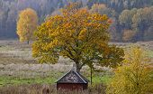 Chestnut tree, red cabin, shelter on the field.
