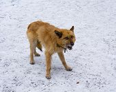 pic of homeless  - Homeless hungry dog on the snow - JPG