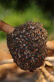 stock photo of beehive  - Bee making beehive on the dead tree - JPG