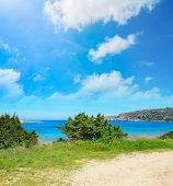 stock photo of vegetation  - vegetation by Capo Testa coastline in Sardinia - JPG