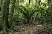 stock photo of jungle  - New Zealand tropical jungle forest - JPG