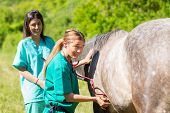picture of great horse  - Veterinary great performing a scan to a young mare  - JPG