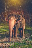 stock photo of jungle  - Elephant stands in the middle of the forest in the jungle - JPG